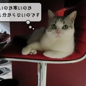 猫雑記 ~暑いのか寒いのかよく分からない猫様達~