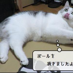 猫動画 ~「むくさんキャッチボールですよ!」2019.09.21~