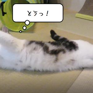 猫動画 ~「何事ですか!?」2019.10.19~