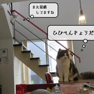 猫雑記 ~どうやら師弟関係になったらしい~