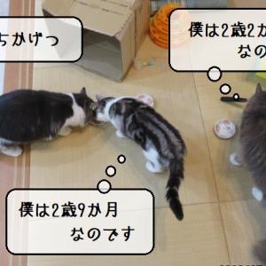 猫雑記 ~2020年7月の猫様体重測定~