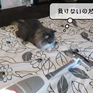 猫動画 ~「恐怖に打ち勝つのだ」2019.11.08~