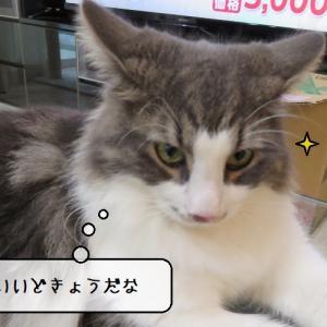 猫雑記 ~わが家の猫様達のグルーミングタイム~