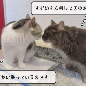 猫雑記 ~回覧板と猫様達~