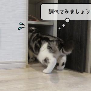 猫雑記 ~ビビりすずめ初めての体験~