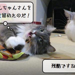 猫動画 ~「食いちぎってやるのだ!」2019.11.16~