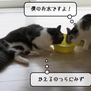 猫雑記 ~ハンティング後のぐったりタイム~