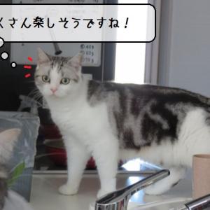 猫雑記 ~猫様達にお土産衝動買い~