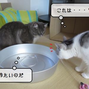 猫の道具 ~夏用ひんやりアルミ缶鍋設置~
