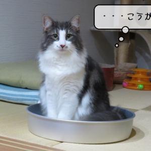 猫の道具 ~ひんやりアルミ缶鍋の活用~
