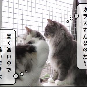 猫動画 ~「カラスさんの鳴き声なのだ?」2019.11.19~