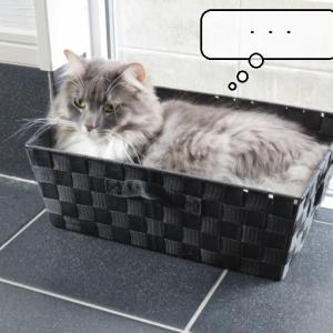 猫雑記 ~むくの意外な行動に心配するすずめ~