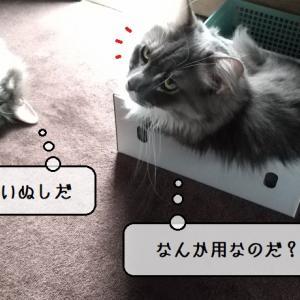 猫雑記 ~むくの意外な行動に心配する飼い主~