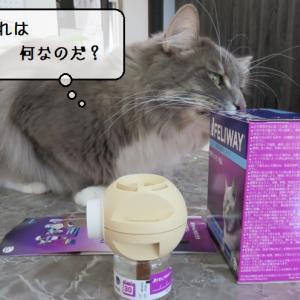 猫の道具 ~ずっと気になっていたフェリウェイを設置してみる~