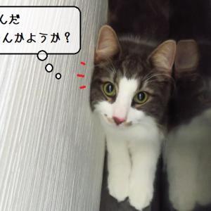 猫雑記 ~自分の大きさを分かっているんだろうか~