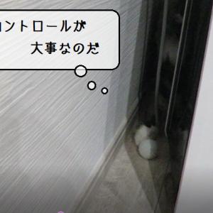 猫動画 ~「飼い主さんとキャッチボールするのだ」2019.12.05~