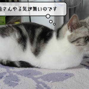 猫雑記 ~夏バテ気味でやる気の無い猫様達~
