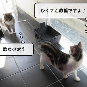 猫雑記 ~お庭に猫様が現れて動揺する猫様達~