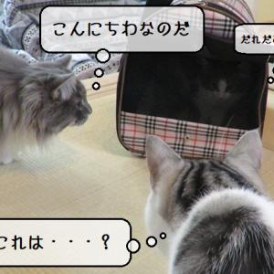 猫動画 ~「・・・どなた様ですか・・・?」2019.12.24~