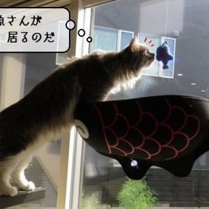 猫雑記 ~すずめ3歳のお誕生日プレゼント設置式~