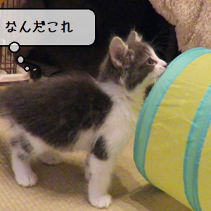 猫動画 ~「初めての大冒険」2019.12.25~