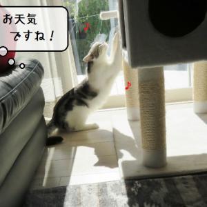 猫雑記 ~少しずつ冬仕様になってきた猫様達~