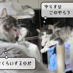 猫雑記 ~むくの微笑ましい悪戯~
