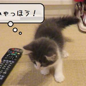 猫動画 ~「暴れん坊てん誕生」2019.12.25~