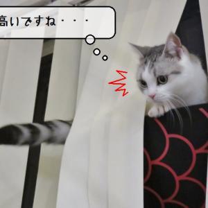 猫雑記 ~ようやく窓ベッドに入ってくれた猫様すずめ~