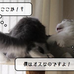 猫動画 ~「おちちはどこだこのやろう」2020.03.02~