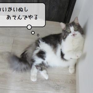 猫雑記 ~北陸の春の訪れを少し感じ始めた猫様達~