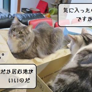 猫雑記 ~飼い主が思いもつかない新しいお気に入りを見つけた猫様むく~