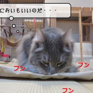 猫雑記 ~クラフト紙が生活の拠点になった猫様達~