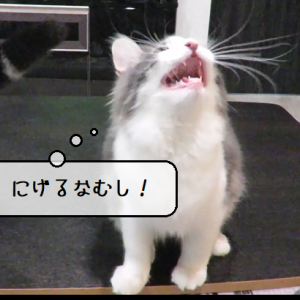 猫動画 ~「ぼくのえものだこのやろう」2020.03.04~