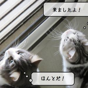 猫雑記 ~ツバメとの戦い第二幕の幕開け~