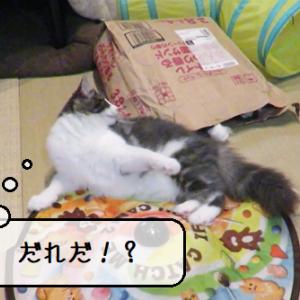 猫動画 ~「ふりかえればやつがいる」2020.03.28~