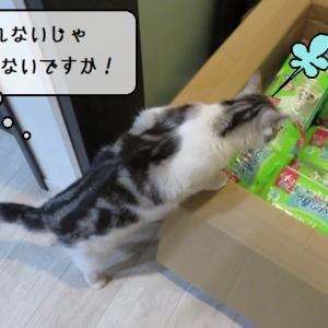 猫雑記 ~3匹の猫様達それぞれの宅配便のたしなみかた~