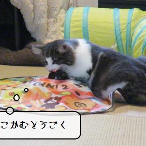 猫動画 ~「うごけこのやろう!」2020.04.06~