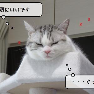 猫雑記 ~すずめ専用アゴ乗せダンボール箱を作ってみた飼い主~