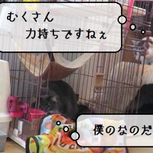 猫動画 ~「今は僕の狩りの時間なのだ!」2020.04.18~