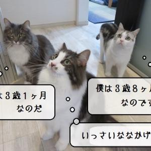 猫雑記 ~2021年6月の猫様体重測定~