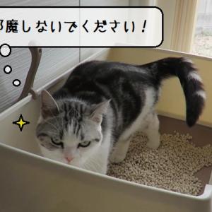 猫動画 ~「おっと・・・おしりからも出そうなのです」2020.04.22~