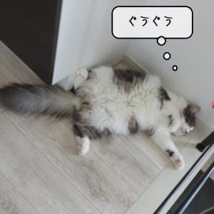 猫雑記 ~お昼寝場所が定まらない猫様むく~