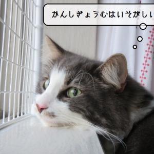 猫雑記 ~わが家では珍しい猫様達の距離感~