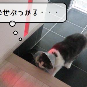 猫動画 ~「なんなんだこのやろう」2020.05.11~