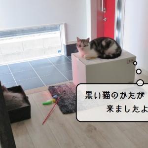猫雑記 ~黒い猫様の箱の使者すずめ~