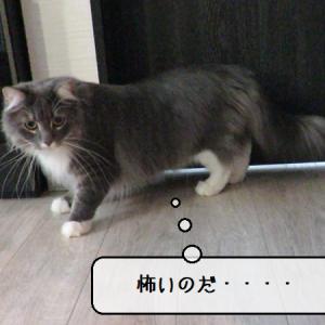 猫動画 ~「ライオンさんが居るのだ・・・」2020.05.13~