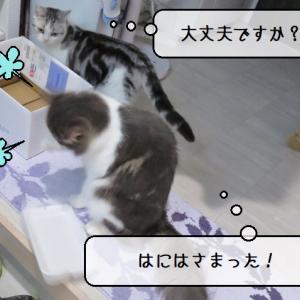 猫雑記 ~暴れん坊猫様てんの新たなターゲット~