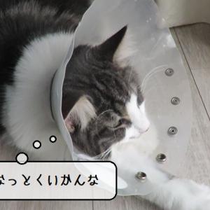 猫動画 ~「ちゅんちゅん捕まえたいのだ!」2020.05.14~