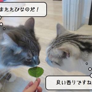 猫雑記 ~新・またたびの木の葉っぱお披露目式~